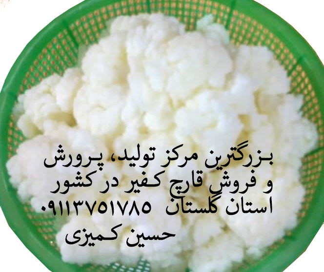 کمیزی_قارچ کفیر_09114101785