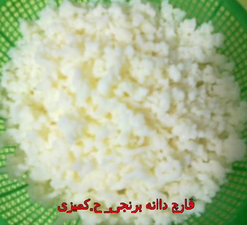 نمونه دیگر از یک واریته قارچ کفیر موسوم به دانه برنجی